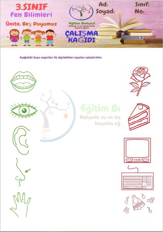 3.Sınıf Beş Duyumuz Etkinlikleri Örnek Sayfa